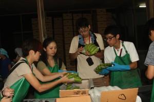 バナナの箱入れにチャレンジ中の日本人訪問者
