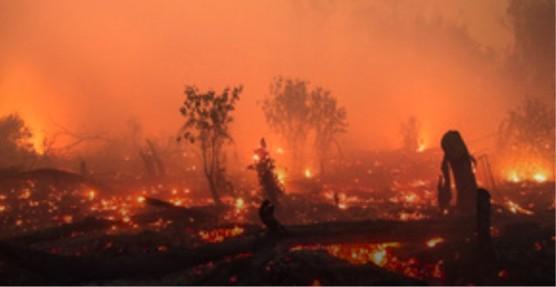 パームオイル・プランテーションの拡張のために燃えてしまう森林