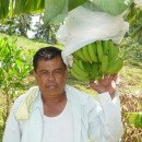 【バナナニュース257号】バランゴンバナナ産地紹介 ~東ネグロス州~