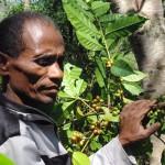 【ハトリア郡:リスメタウ(Lismetahu)グループ】コーヒー生産者収穫の様子②