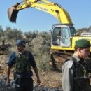 パレスチナ:オリーブの木、2000本が破壊される