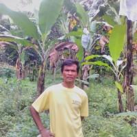 バナナニュース262号:バランゴンバナナ産地紹介~北ミンダナオ~