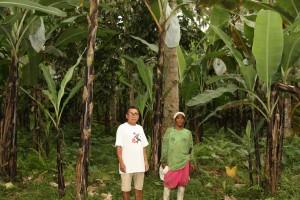 ツピのバランゴンバナナ圃場(2017年2月)