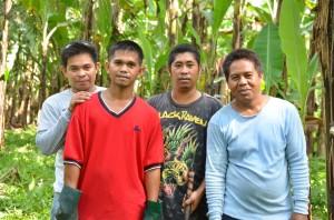 バナナの収穫などを行う作業員たち