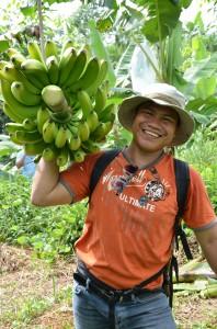 収穫されたバランゴンバナナ