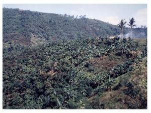 最初のバランゴンバナナ山