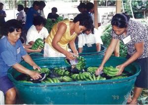 バナナのホコリやゴミを丁寧に洗い落とします。