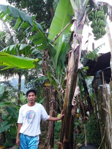 アーニエルさんとバランゴンバナナ