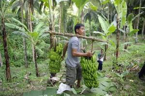 生産者が集荷所までバランゴンを運びます。