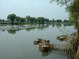 シドアルジョのエビの粗放養殖池