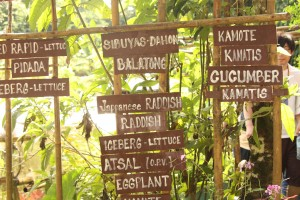 ボニファシオ農園では、どこに何があり、何の作物が植えられているのかが看板に書かれています。
