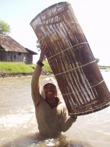 シドアルジョではプラヤン(竹の仕掛け)を使って収獲をします。