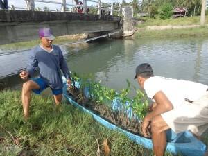 生産者とATINAスタッフによるマングローブの植樹活動