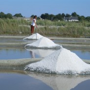 【PtoP NEWS vol.11 201702 ここが知りたい】「天日塩」産地で異なる風味、お気に入りを見つけては?