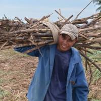 【PtoP NEWS vol.15/2017.6 特集】マスコバド糖民衆交易に取り組んで30周年