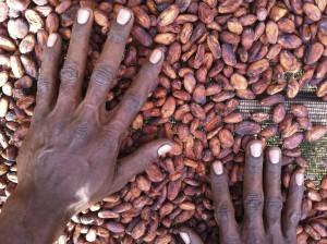 カカオ豆は果肉を除去して天日乾燥します。