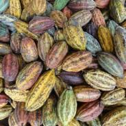 【PtoP NEWS vol.13/2017.04 ここが知りたい!チョコレート】パラダイスパプアの地元販売はどんな感じ??