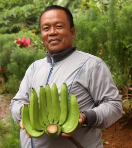 産地ではバナナがたくさん採れています。是非、バランゴンバナナを食べてください。