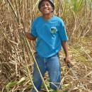 SAVE Negros:環境にやさしい持続可能な農村コミュニティづくり-その2-