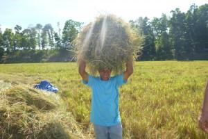 稲刈り、豊作で嬉しいダニエル委員長