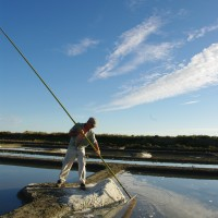 【PtoP NEWS vol.16/2017.07 特集】伝統的なゲランド塩田での収穫
