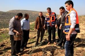 オリーブの木を植樹するパレスチナの生産者