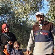 【PtoP NEWS vol.21/2017.12】パレスチナでのオリーブ収穫