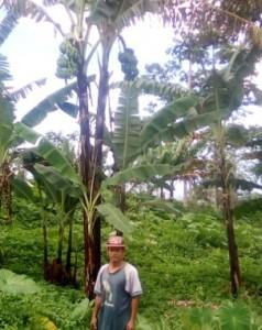 ファベラさんとバランゴンバナナ