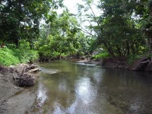 先住民族たちが生活水として使う川に農薬は流せないのでその使用はない。
