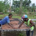 発酵後の豆を乾燥台に広げる