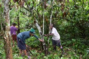 カカオの森の下草刈りは、一人ではなかなか大変な作業です。みんなで協力してやれば仕事ははかどり、みんなで森で食べるお弁当も格別です。