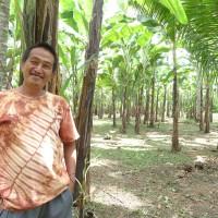 【PtoP NEWS vol.24/2018.03】バランゴンバナナ民衆交易の悩み事