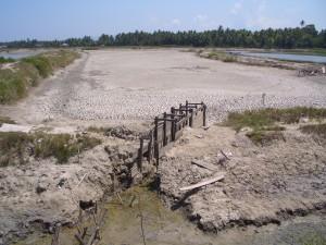 元気なエビを育てる環境をつくるために大切な池干し