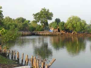 エコシュリンプの養殖池