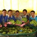 【PtoP NEWS vol.20/2017.11】バランゴンバナナを洗浄・箱詰めしているパッカーの皆さん from フィリピン・ネグロス島