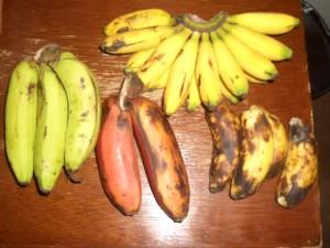 フィリピンにあるいろいろな種類のバナナ