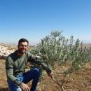 【PtoP NEWS vol.28/2018.10】特集:土地を守るためのオリーブ栽培 from パレスチナ
