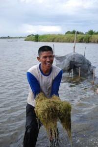 水草を発酵させて発生させたプランクトンがエビのエサになります。