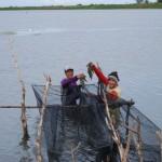 バガンとよばれる定置網式の罠を使ったエビの収獲風景(スラウェシ島)