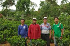 コーヒー畑で