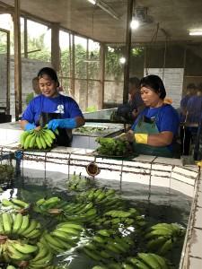 バナナの出荷が少ないと仕事も少なくなるため、箱詰め担当者たちも出荷量が増えることを待ち望んでいます。